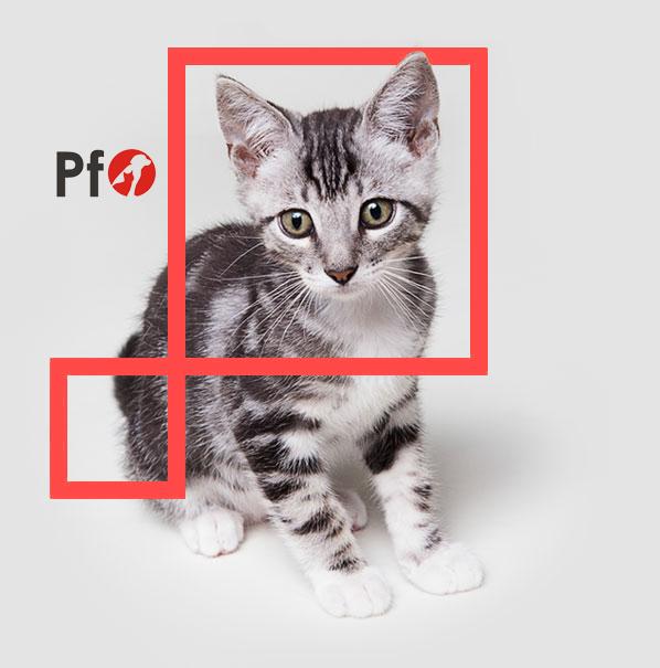 Młody kot oraz logo PetFood Ostrowscy