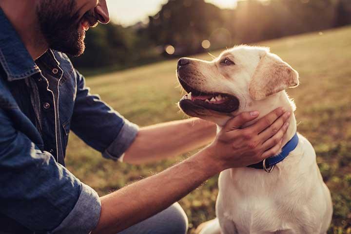 Pies głaskany przez jego właściciela