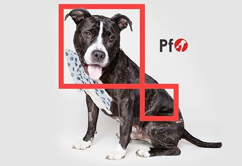 Pies na szarym tle oraz logo PetFood Ostrowscy